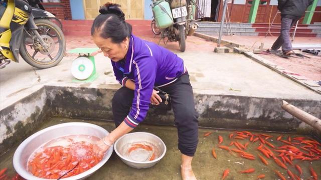 Thăm làng nuôi cá chép đỏ Thủy Trầm - Ảnh 3.