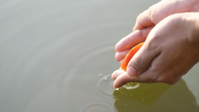 Thăm làng nuôi cá chép đỏ Thủy Trầm - Ảnh 5.