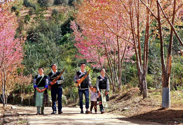 Rực rỡ sắc đào rừng ở vùng cao Mù Cang Chải - Ảnh 8.