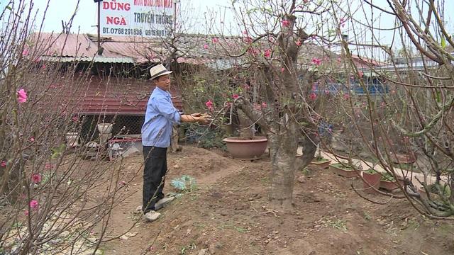 Người dân làng đào lo lắng mùa vụ Tết bị ảnh hưởng bởi thời tiết - Ảnh 1.