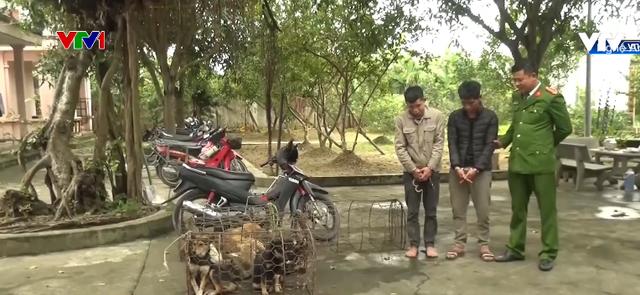 Nghệ An: Bắt nhóm trộm chó mang hung khí nóng - Ảnh 1.