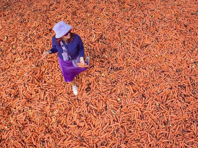 Kỳ lạ, đổ 240.000 củ cà rốt ra phố để trưng bày nghệ thuật - Ảnh 2.