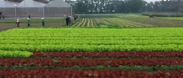 Làm sao để thúc đẩy tín dụng vào nông nghiệp công nghệ cao? - Ảnh 4.