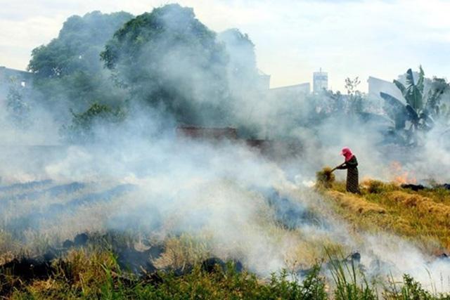 Việt Nam sẽ nhận hơn 51 triệu USD nhờ giảm phát thải - ảnh 1