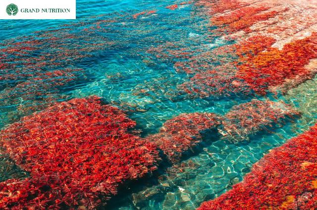 Nước tăng chiều cao GTall: Đột phá mới về giải pháp tăng chiều cao tự nhiên, hiệu quả - Ảnh 2.
