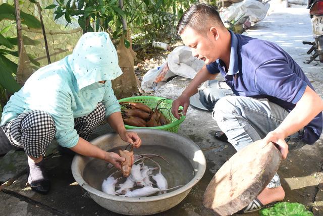 Làng bắt chuột Hải Dương vào mùa đắt hàng - Ảnh 6.