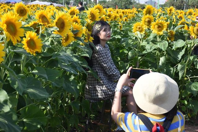 Vườn hướng dương 26.000 bông mở cửa miễn phí đón khách - Ảnh 9.
