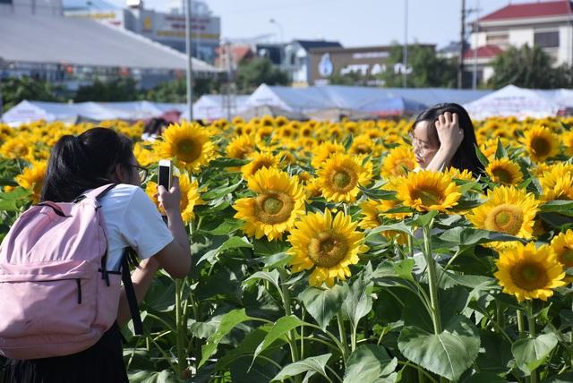 Vườn hướng dương 26.000 bông mở cửa miễn phí đón khách - Ảnh 7.