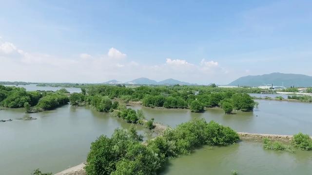 """Chung tay để """"triệu cây vươn cao cho Việt Nam xanh"""" - Ảnh 2."""