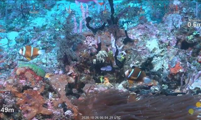 Phát hiện rặng san hô khổng lồ cao đến 500m tại Australia - Ảnh 3.