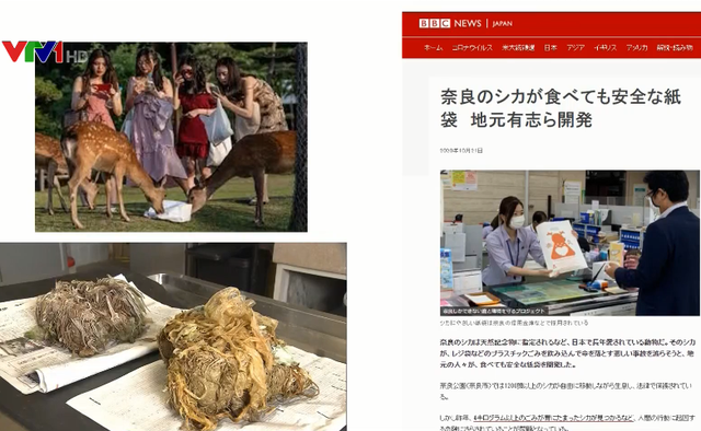 Vắng bóng khách du lịch do dịch COVID-19, hươu ở Nhật Bản ốm đói, giảm số lượng - ảnh 1