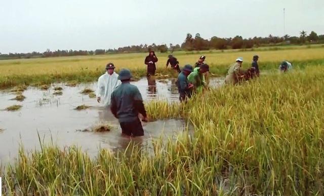 Nông dân oằn mình cứu lúa ngập mùa lũ - Ảnh 2.