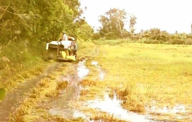 Nông dân oằn mình cứu lúa ngập mùa lũ - Ảnh 1.