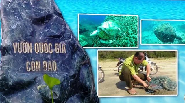 Việt Nam nỗ lực bảo vệ rùa biển - Ảnh 1.