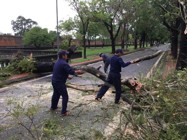 Bão số 13 ảnh hưởng, Thừa Thiên - Huế có gió rất mạnh quật đổ cây - Ảnh 1.