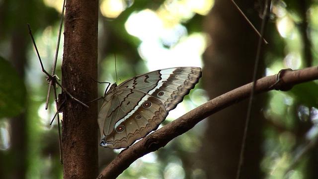 Sắc màu của bướm và những điều có thể bạn chưa biết - ảnh 2