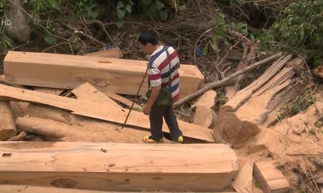 Rầm rộ nạn phá rừng tự nhiên, chiếm đất ở Khánh Hòa - Ảnh 1.