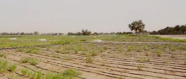 Nông nghiệp thông minh ở vùng sa mạc - Ảnh 1.
