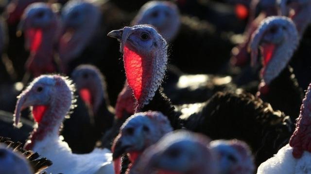 Hàn Quốc phát hiện các trường hợp nhiễm chủng cúm gia cầm độc lực cao tại trang trại - Ảnh 1.