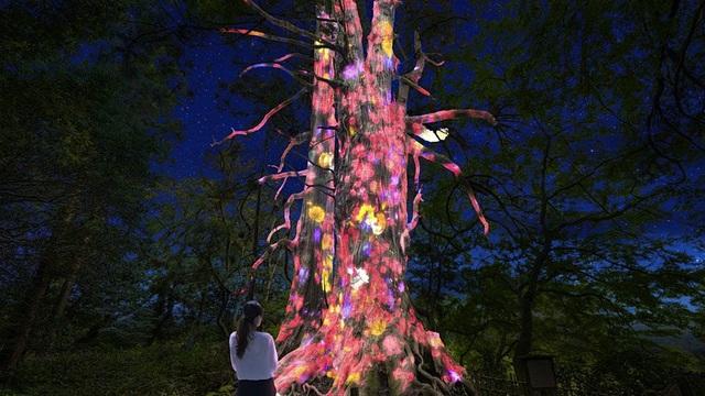 Lạc lối trong ánh sáng huyền ảo tại vườn cổ đẹp bậc nhất Nhật Bản - ảnh 1