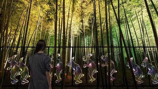 Lạc lối trong ánh sáng huyền ảo tại vườn cổ đẹp bậc nhất Nhật Bản - ảnh 2