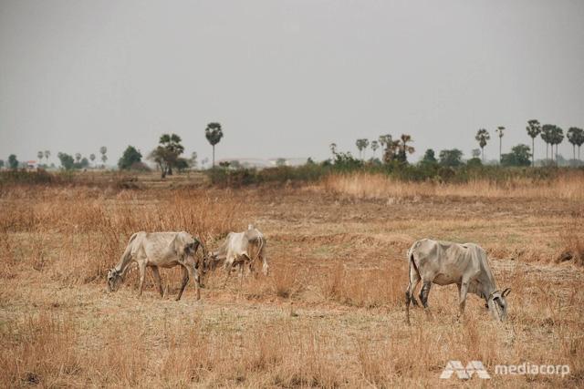 1 tỷ người ở châu Á có thể phải trải qua những đợt nắng nóng khủng khiếp vào năm 2050 - Ảnh 2.