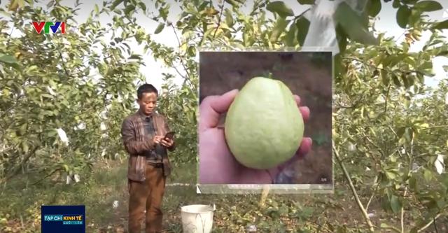 Người nông dân Trung Quốc đổi đời nhờ thương mại điện tử - Ảnh 1.