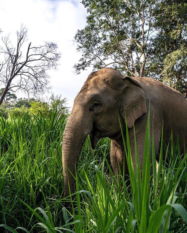 Khám phá cuộc sống những chú voi từ ngôi nhà bong bóng - Ảnh 5.