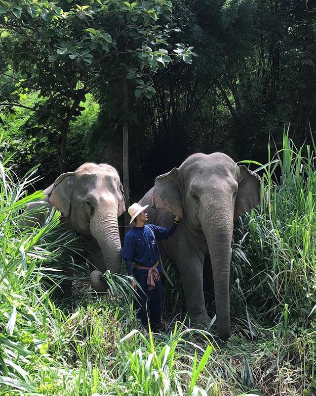 Khám phá cuộc sống những chú voi từ ngôi nhà bong bóng - Ảnh 3.
