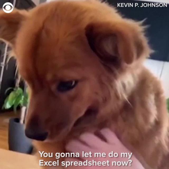 Chó kéo tay không cho chủ làm việc ở nhà - Ảnh 1.