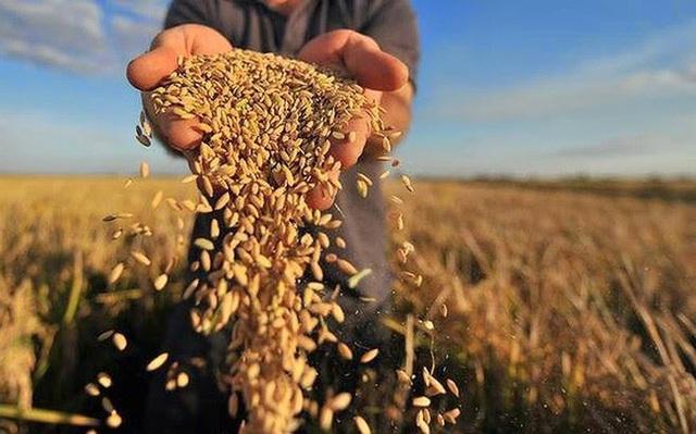 WFP: Mất an ninh lương thực có thể trầm trọng thêm do COVID-19 - Ảnh 1.