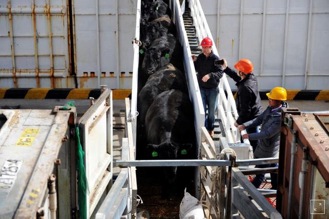 Trung Quốc cấm cửa 4 công ty xuất khẩu thịt bò của Australia - Ảnh 1.