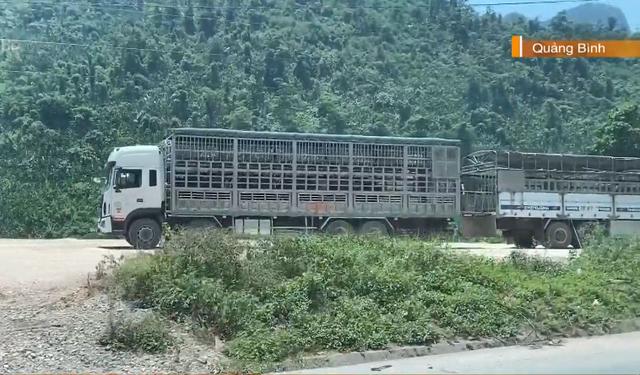 Cửa khẩu Cha Lo: Kiểm dịch trâu, bò nhập khẩu qua loa, tiềm ẩn nguy cơ dịch bệnh - Ảnh 2.