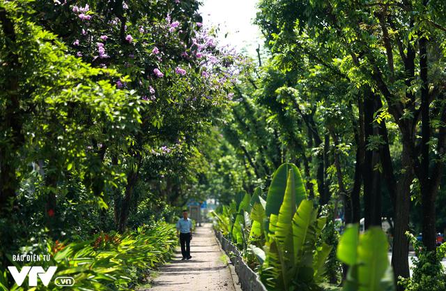 Đường phố Hà Nội nhuộm màu nắng vàng - Ảnh 10.