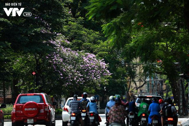Đường phố Hà Nội nhuộm màu nắng vàng - Ảnh 6.