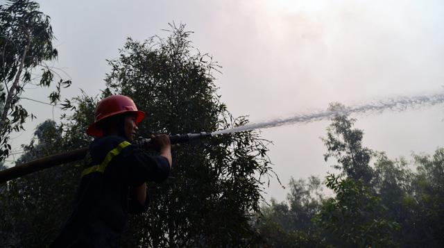 Hàng chục ha rừng tràm ở Kiên Giang bị bà hỏa thiêu rụi - Ảnh 3.