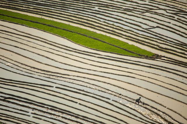 Mùa nước đổ trên những thửa ruộng bậc thang - Đẹp bình dị - ảnh 1