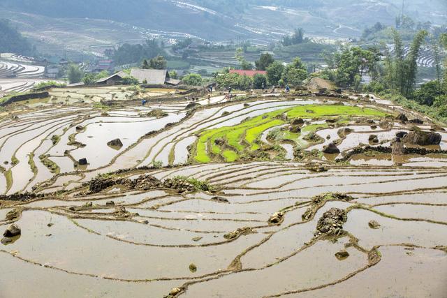 Mùa nước đổ trên những thửa ruộng bậc thang - Đẹp bình dị - ảnh 4