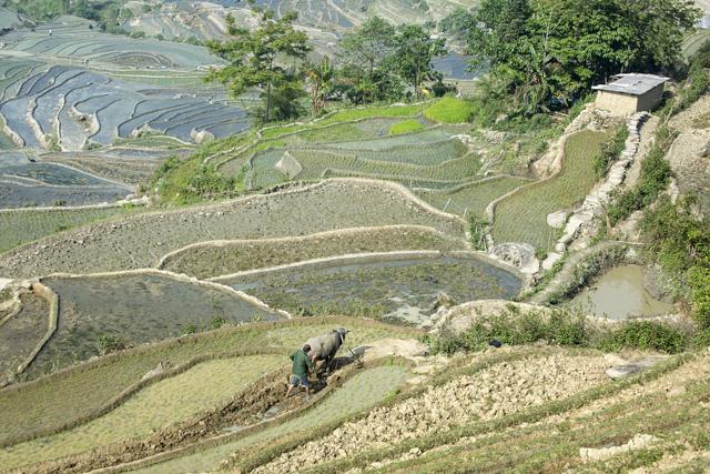 Mùa nước đổ trên những thửa ruộng bậc thang - Đẹp bình dị - ảnh 5
