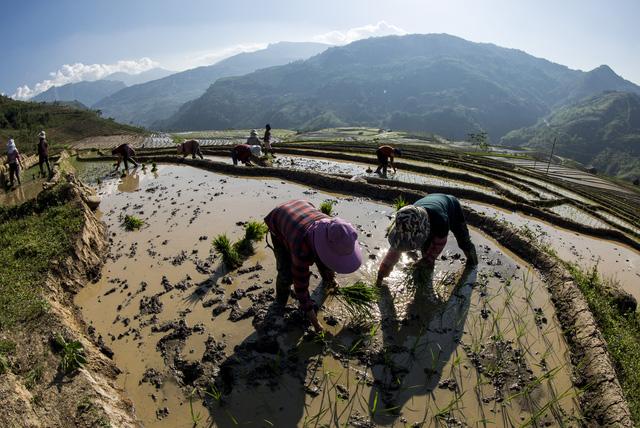 Mùa nước đổ trên những thửa ruộng bậc thang - Đẹp bình dị - ảnh 7