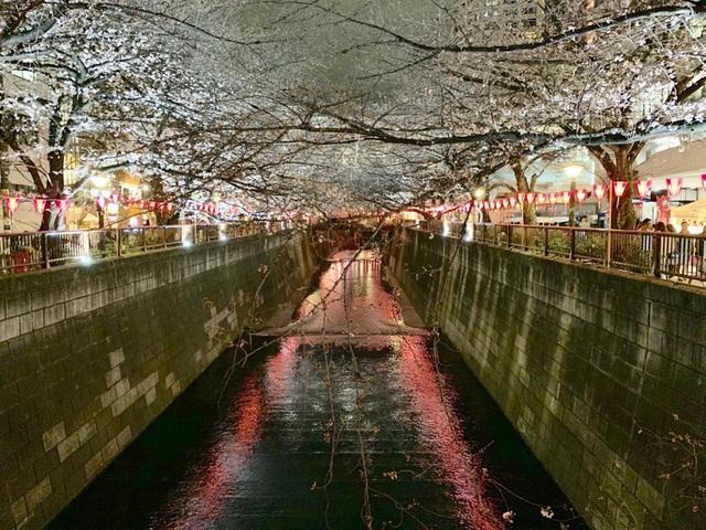 Nhật Bản chi 12 tỷ USD để lôi kéo du khách trở lại - ảnh 1