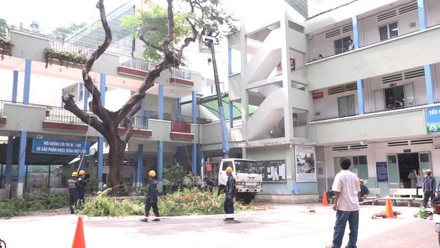 Đốn bỏ cây phượng biểu tượng còn lại ở trường THCS Bạch Đằng, học sinh đi học trở lại bình thường - Ảnh 1.