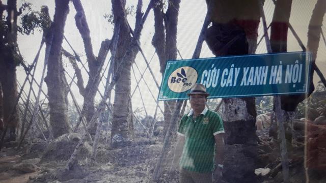 Số phận của hàng cây trên đường Kim Mã giờ ra sao? - Ảnh 5.