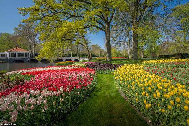 """""""Vườn hoa mùa xuân đẹp nhất thế giới nở rộ nhưng không có khách tham quan - Ảnh 7."""