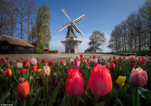 """""""Vườn hoa mùa xuân đẹp nhất thế giới nở rộ nhưng không có khách tham quan - Ảnh 1."""