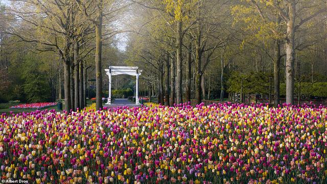 """""""Vườn hoa mùa xuân đẹp nhất thế giới nở rộ nhưng không có khách tham quan - Ảnh 9."""