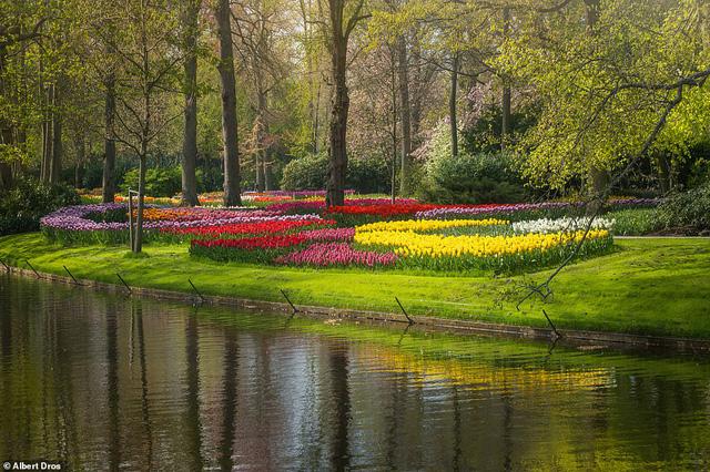 """""""Vườn hoa mùa xuân đẹp nhất thế giới nở rộ nhưng không có khách tham quan - ảnh 4"""