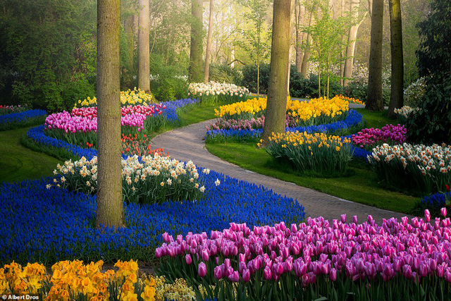 """""""Vườn hoa mùa xuân đẹp nhất thế giới nở rộ nhưng không có khách tham quan - Ảnh 3."""