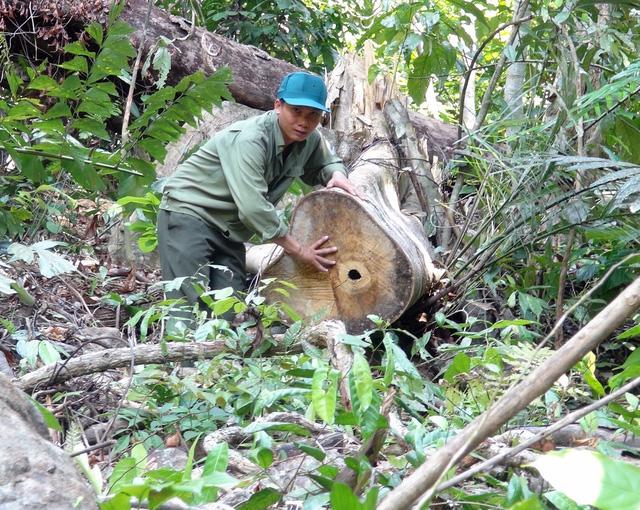 Phú Yên: Điều tra các đối tượng ngang nhiên mở đường để phá rừng - Ảnh 2.
