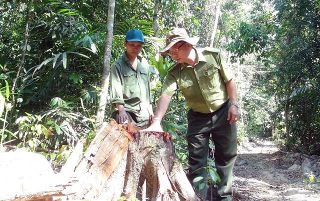 Phú Yên: Điều tra các đối tượng ngang nhiên mở đường để phá rừng - Ảnh 3.